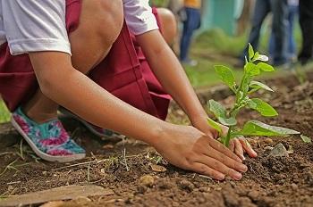 Champú bio con ingredientes procedentes de cultivo ecológico